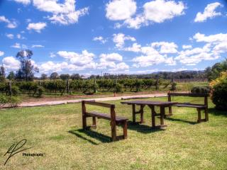 A nice vineyard shot from the Lovedale area in New South Wales' Hunter Valley region.