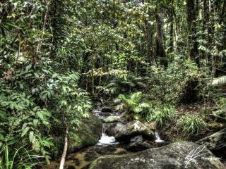 Just north of Port Douglas in Far North Queensland is the lush tropical rainforest called the Daintree.