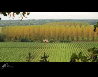 A photo taken south of Bordeaux overlooking the beautiful vines adorning a typical French estate.